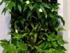 Фото: Вертикальный сад, фитостена, живая картина